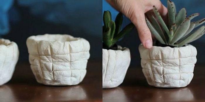 insert plants