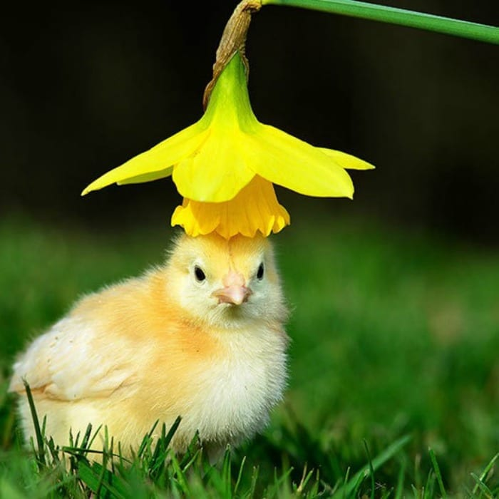 this chick who doesn't think flower hats are amusing