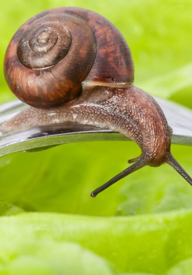 snails are food